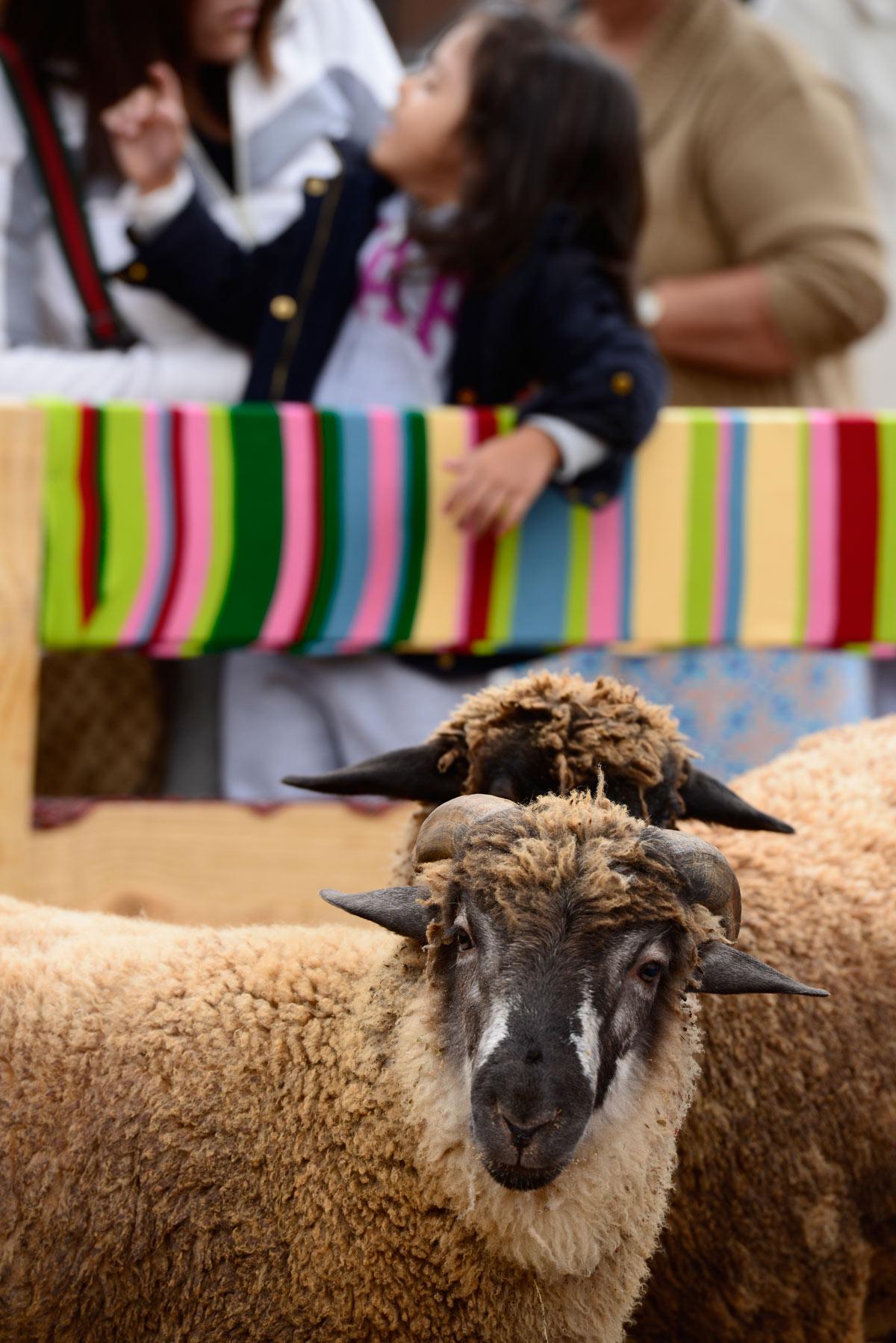 evento woolfest